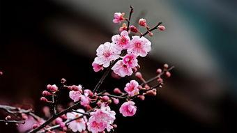 多种花的花语