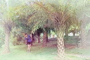 棕榈树风水禁忌