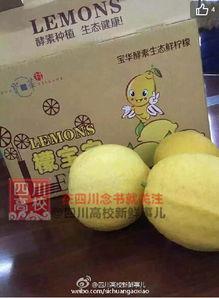 售卖柠檬语录