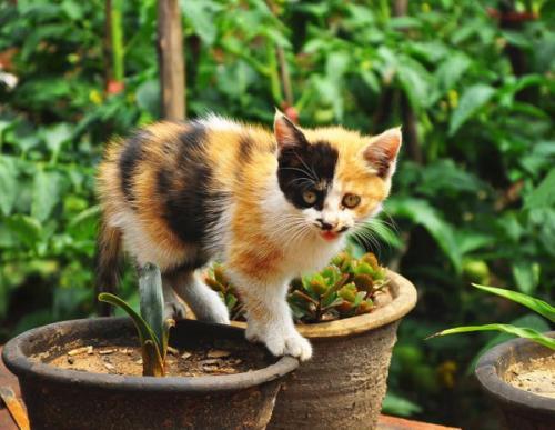 老舍散文养花和猫百字感言