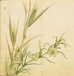 有关植物或动物的诗词
