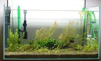 生态鱼缸过滤系统管道养花