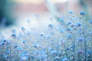 漂亮的鲜花装载了太多美好的记忆 花朵唯美图片大全