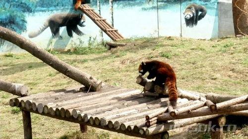 大青山野生动物世界即将复园超多户外特色项目等你体验