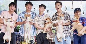 向往的生活中,张子枫的抱狗姿势上了热搜,从抱狗上可以看人品狗狗