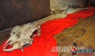 破解了中国70年前的龙骨之谜