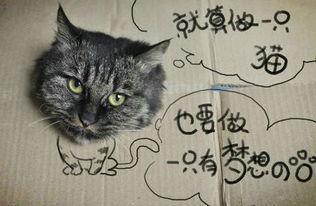 猫咪的梦想歌词百度文库