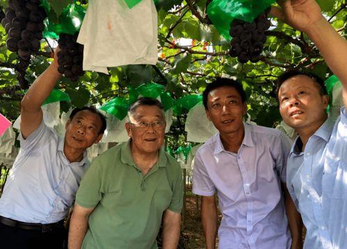 时代楷模赵亚夫在田间指导葡萄生产.