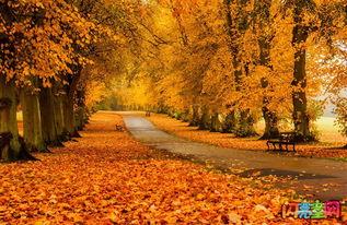 关于秋天的优美现代诗句大全集