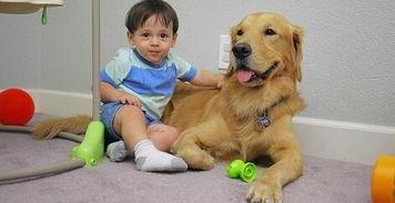 大金毛Arlo是个名副其实的大暖汪图片第25281张 狗狗宝贝图片