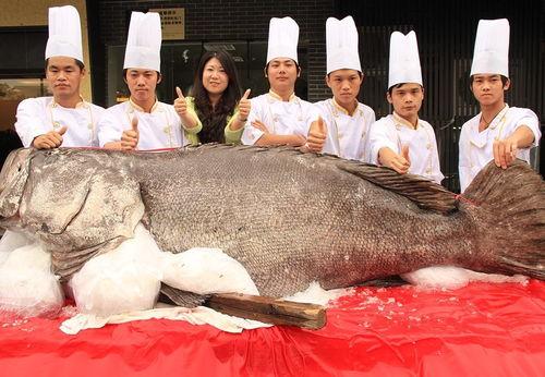 有谁见过熊猫金鱼和喜鹊花龙晴?广西南宁有卖的嘛?