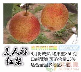 上海原生梨苗种植管理套餐