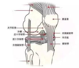 如何预防膝关节运动损伤