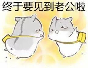...纯文字污金馆长熊猫头蘑菇头暴走漫画魔性QQ聊天】の表情包-可爱...
