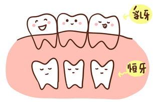 形容乳牙的句子