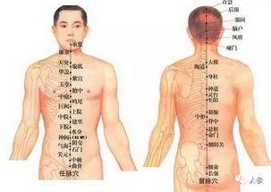 阴阜-中医的任督二脉是什么意思