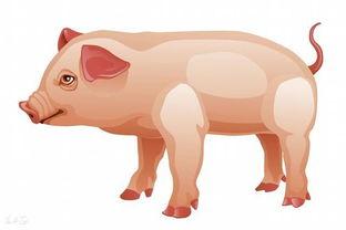 83猪今财运好不好