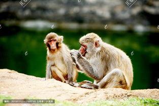 动物世界猴子