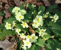 2月5日生日的诞生花和诞生石是什么(2月5日的生日花和生日宝石是什么