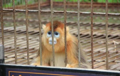日本三个动物心理测试