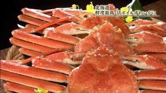 其他电视台:美国大选,美国大选,美国大选,美国大选东京电视台:看,北海道的大螃蟹