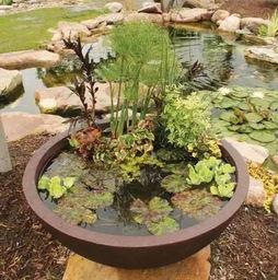 池塘泥可以养花不