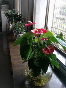 适合在办公室的水养花