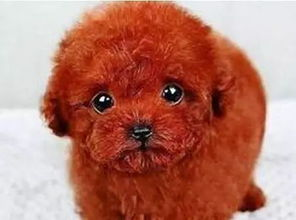 好听的宠物狗狗名字大全 洋气的宠物狗名字