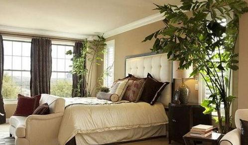 ▲卧室植物摆放风水禁忌