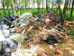 小树林里垃圾成堆-暗藏垃圾