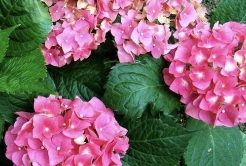 家中养花与温度