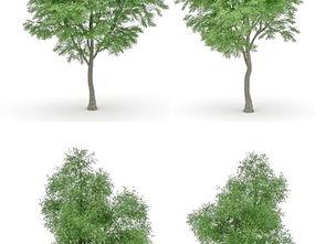 树3D模型设计图下载 图片331.26MB 其他模型库 其他模型