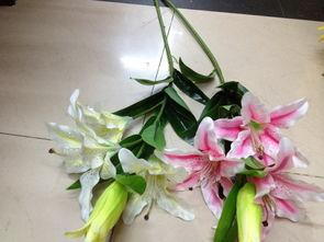 香水百合-百合花集团