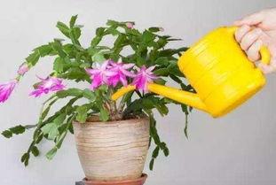 养花怎么养什么时候浇水
