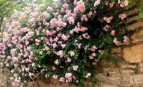 农村柴火土可以养花吗