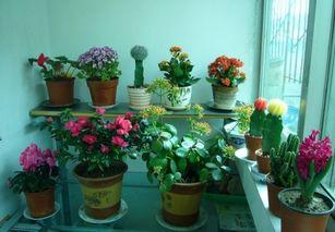 家庭以养花卉有哪些