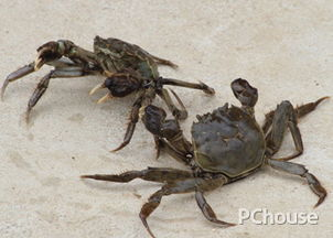 食用螃蟹的注意事项