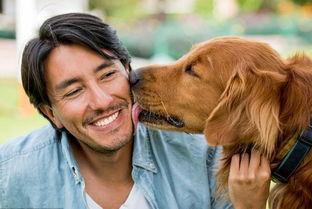金毛幼犬及金毛成犬缺钙带来的危害是什么