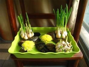 养花的花土可以用大蒜吗