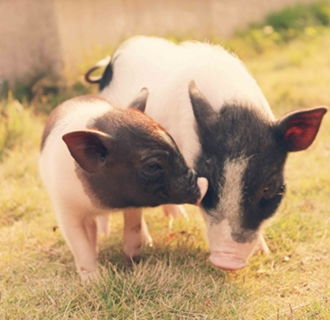 71年属猪的家里养花的数量