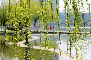 关于描写春景的诗句