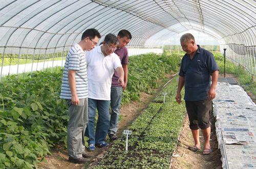 农业专家赵亚夫现场教授有机大棚蔬菜种植技术