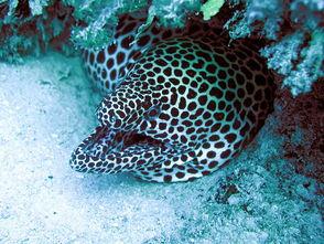 十大最罕见最怪异的海洋生物