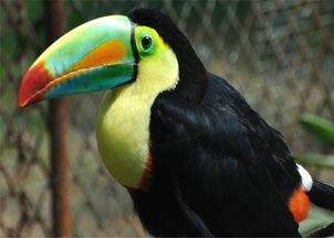 中华国宝区中华国宝区建成于2012年底,是杭州野生动物世界专门邀请美国专家设计,投资5000万,占地2万平米左右的盛大项目.