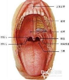有关口腔腺体瘤的知识