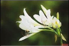 甘肃天水喜欢养花的人