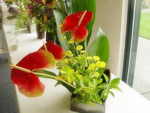 水养花怎么开花