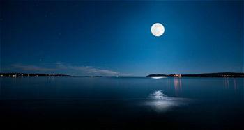 有月亮和树的古诗词