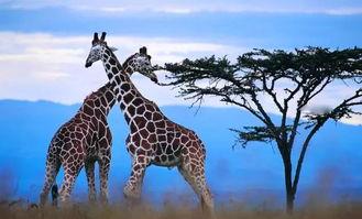 南非旅游攻略