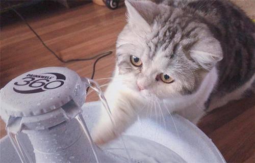 公猫尿不出来怎么办